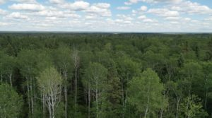 Northern forest near Big River
